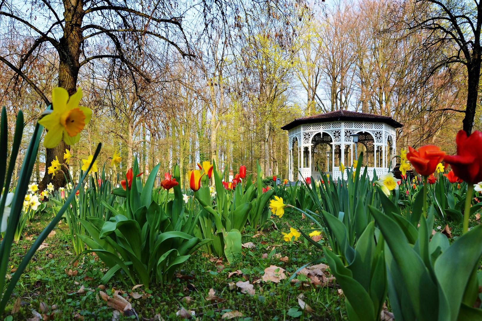 Frühling im Schwabacher Stadtpark