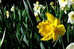 Frühling im Stadtgarten Vegesack