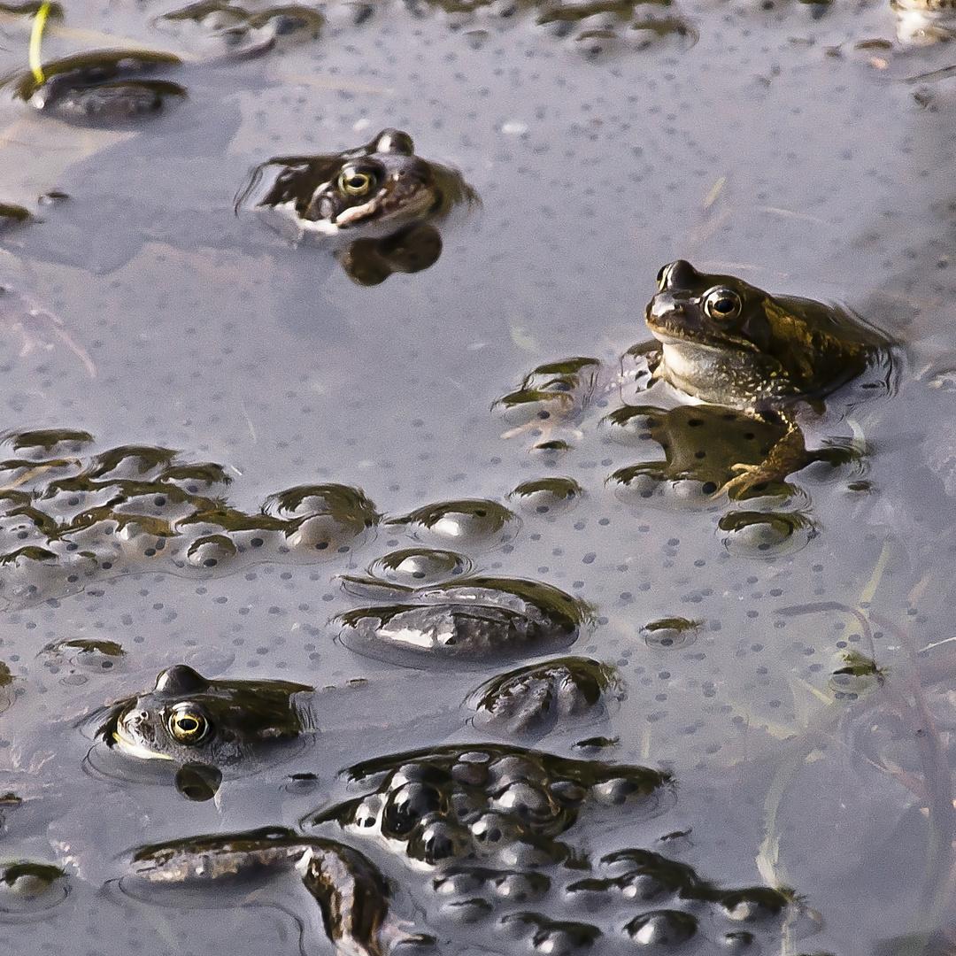 Frühling im Teich
