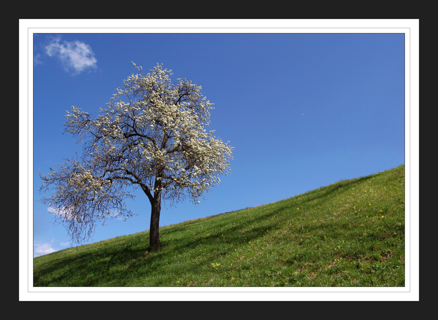 Frühling im Tiroler Oberland !