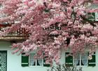 Frühling im Tölzer Land