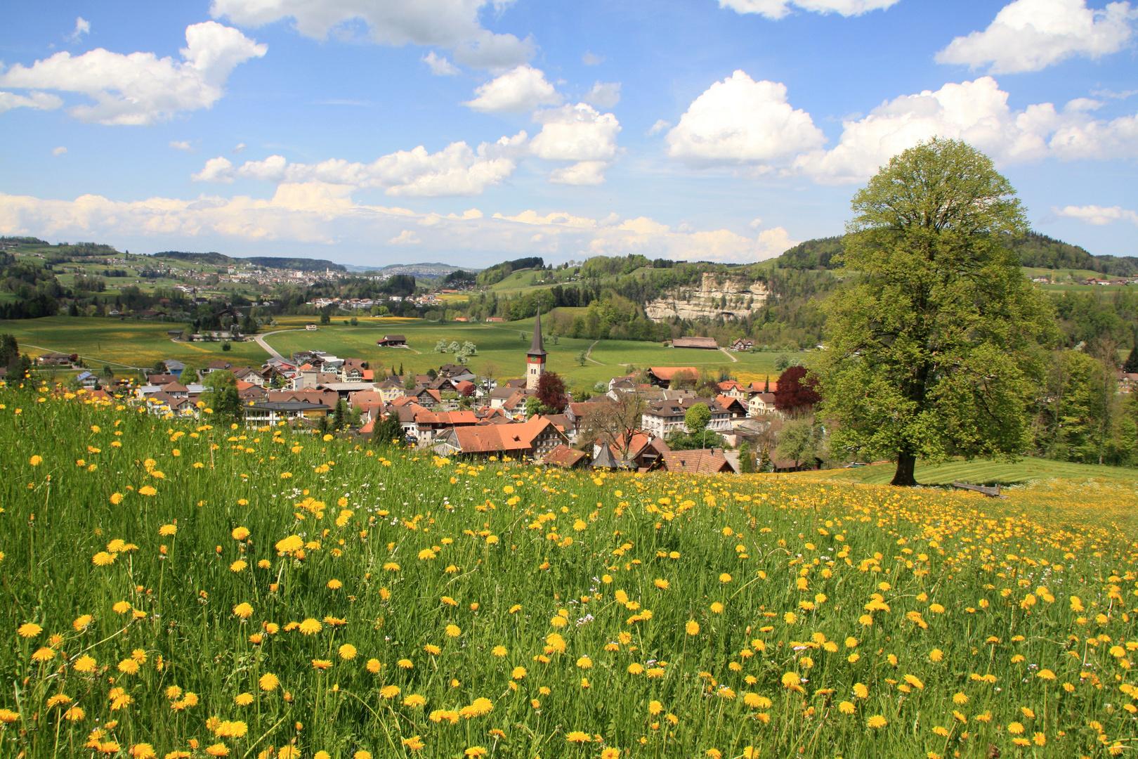 Frühling im Toggenburg II