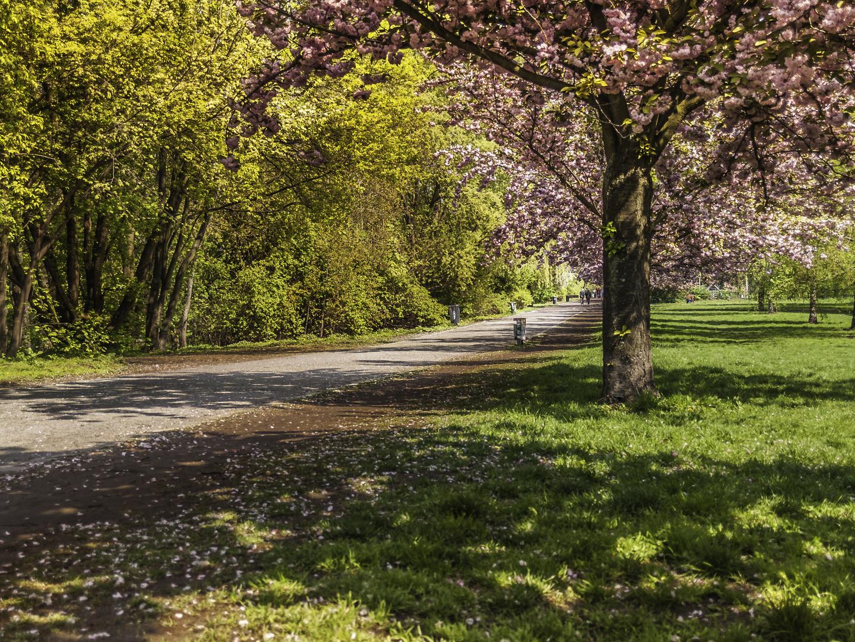 Frühling im Treptower Park Berlin