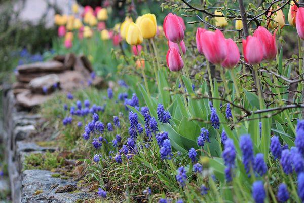 Frühling im Trüben