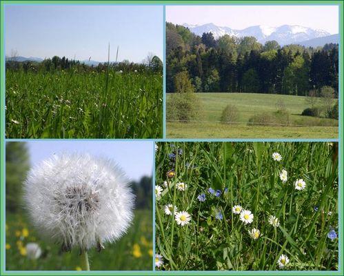 Frühling im Voralpenland