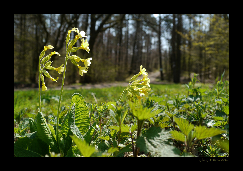 Frühling im Wald 1