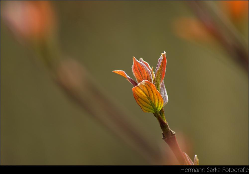 Frühling im Wald 2