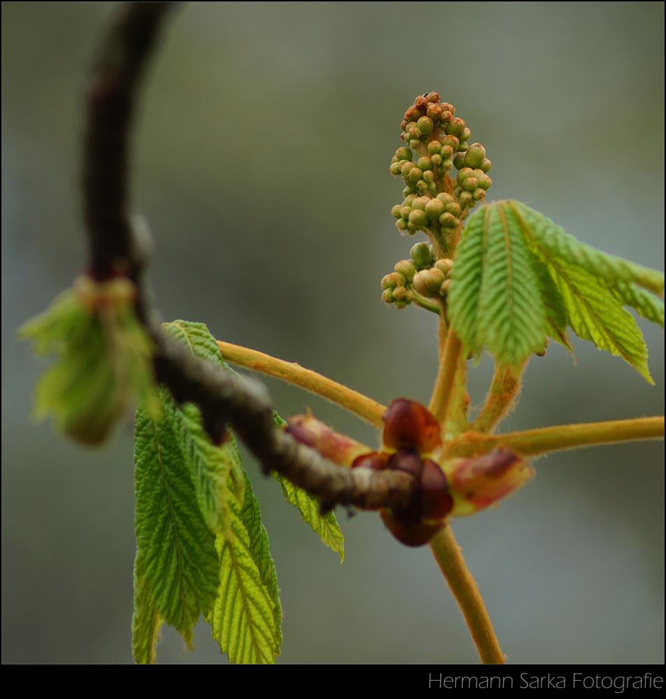 Frühling im Wald 3