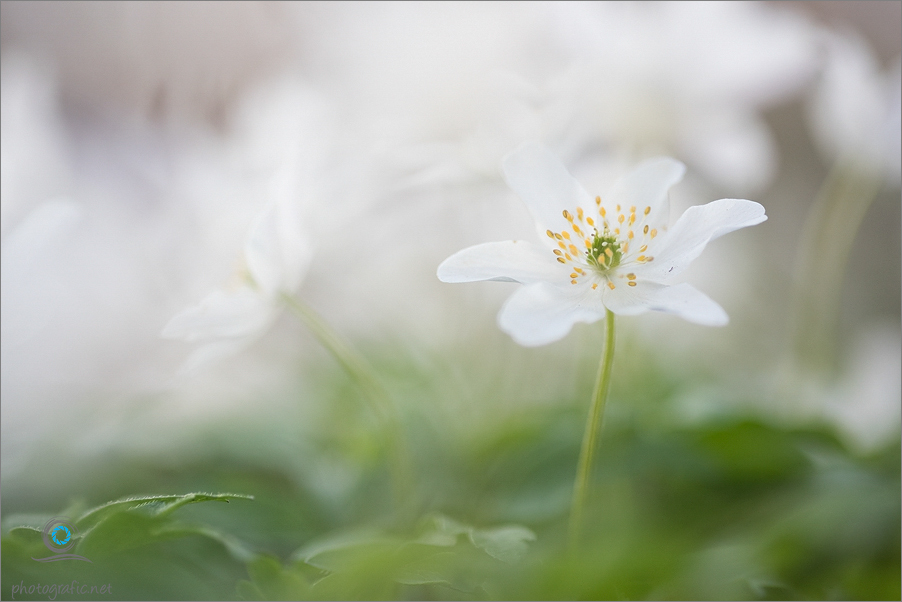 ~Frühling im Wald~