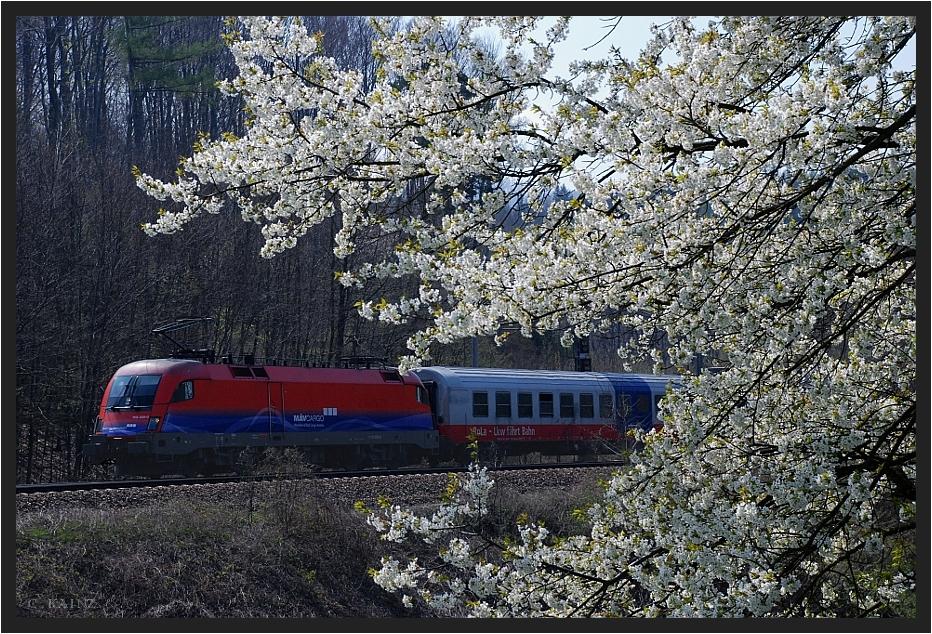 Frühling im Wienerwald V