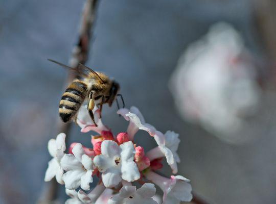 Frühling im Winter - Ist das unser künftiges Weihnachtswetter?