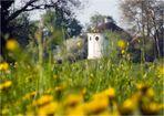 Frühling im Wörlitzer Park