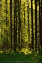 Frühling im Zauberwald
