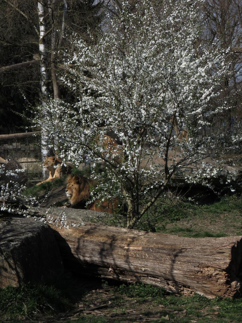Frühling im Zoo