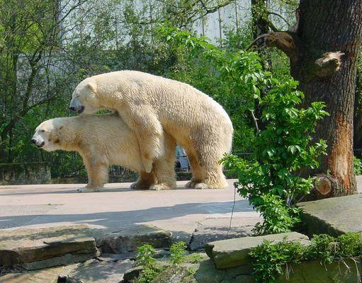 Frühling im Zoo ;-))