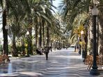 Frühling in Alicante