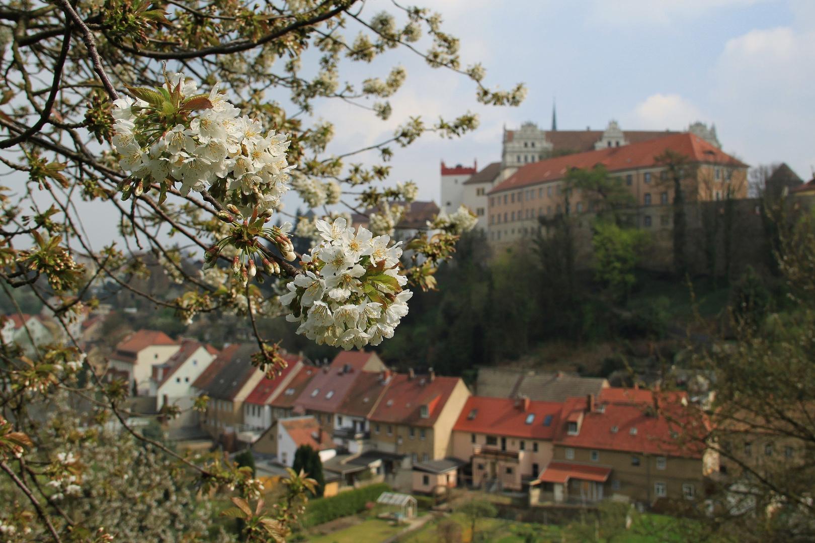 Frühling in Bautzen