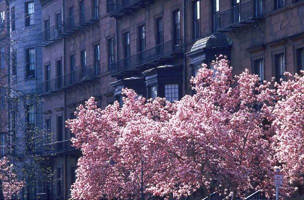 Frühling in Boston