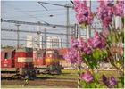 Frühling in Breclav ...