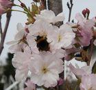 Frühling in Bruchsal