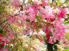 Frühling in Central Park