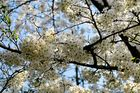 Frühling in DD....