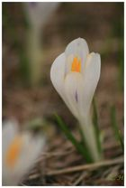 Frühling in den Bergen 01