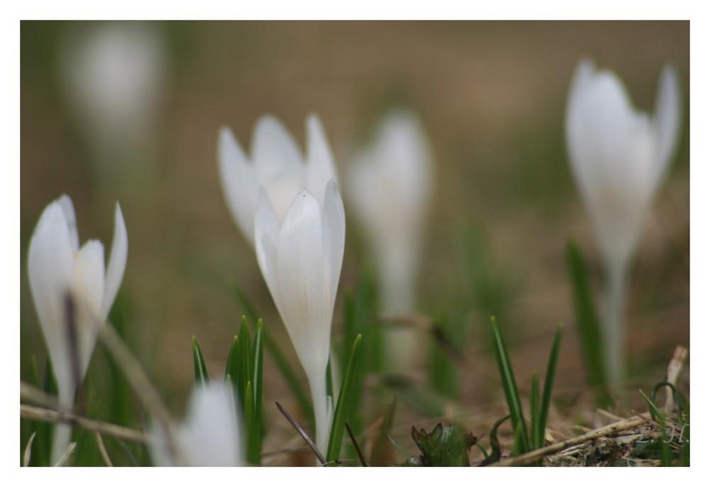 Frühling in den Bergen 02