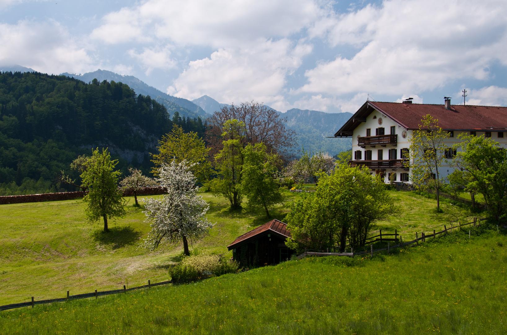 Frühling in den Bergen (1)