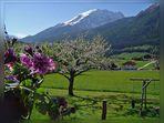 Frühling in den Bergen ( 1 )