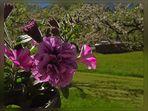 Frühling in den Bergen ( 2 )