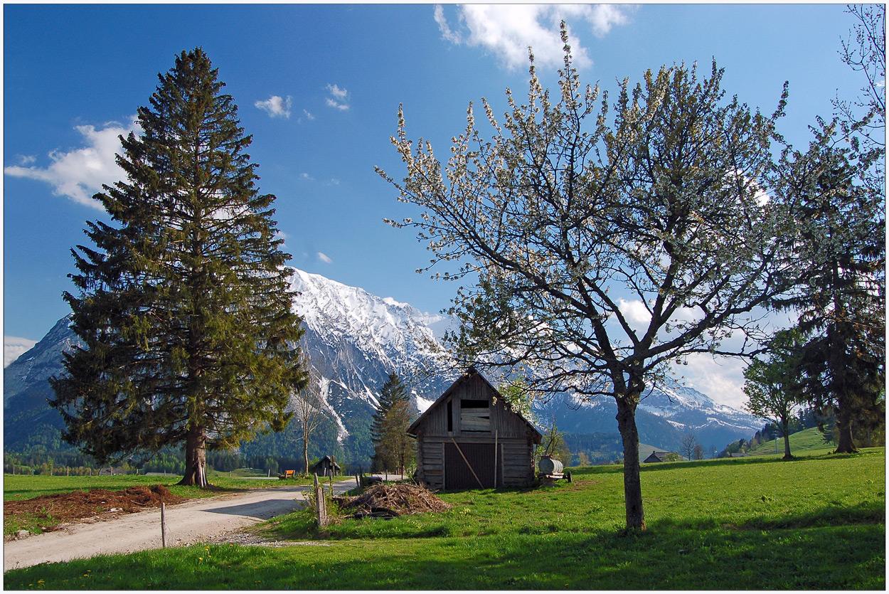 Frühling in den Bergen (2) - 2008