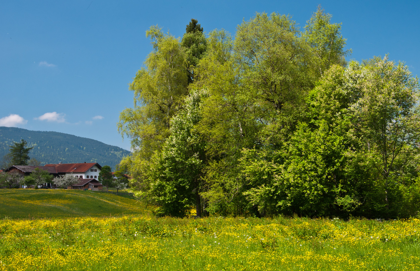 Frühling in den Bergen (3)