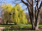Frühling in den Bonner Rheinauen 4
