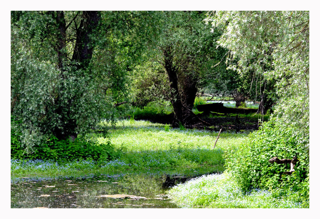 Frühling in den Rheinauen