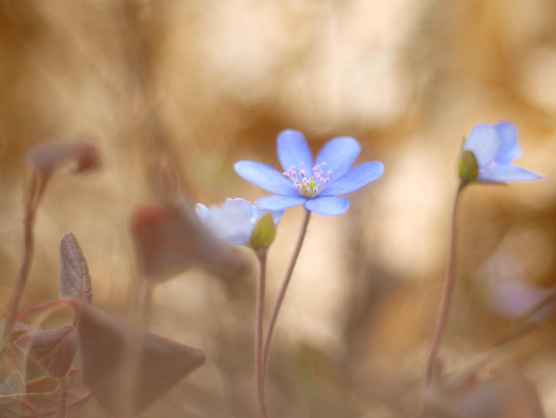 Frühling in den Weißachauen