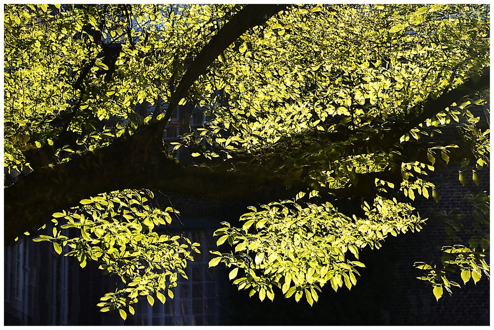 Frühling in der Abtei Rolduci