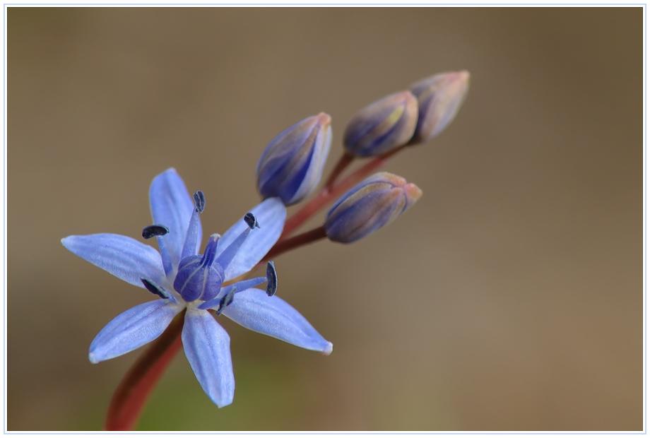 Frühling in der Au