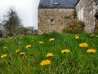 Frühling in der Bretagne