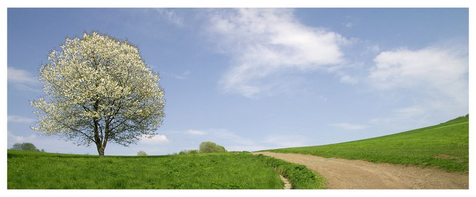 Frühling in der Eifel