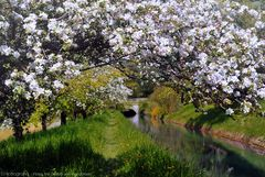 Frühling in der Heimat