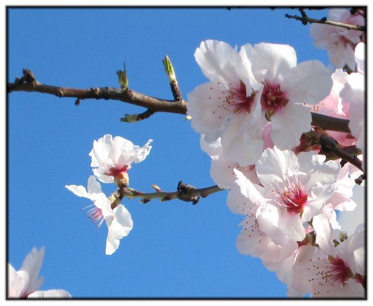 Frühling in der Pfalz