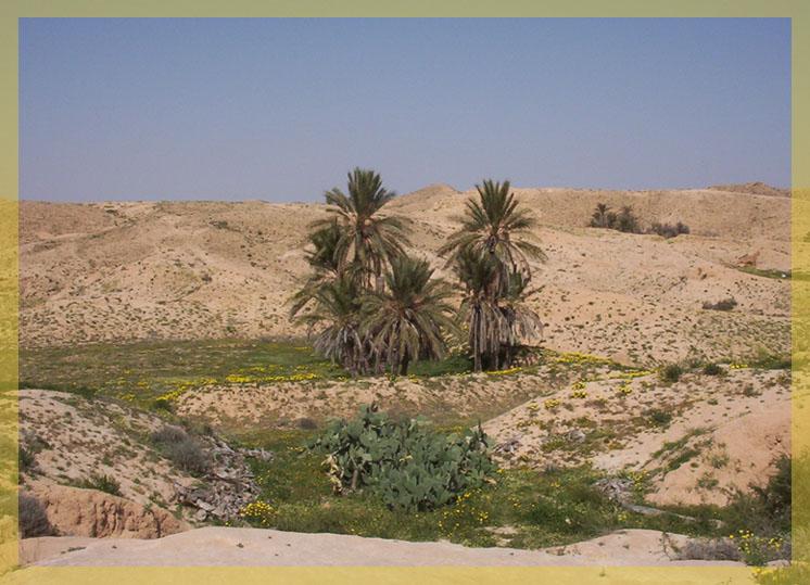 Frühling in der Sahara