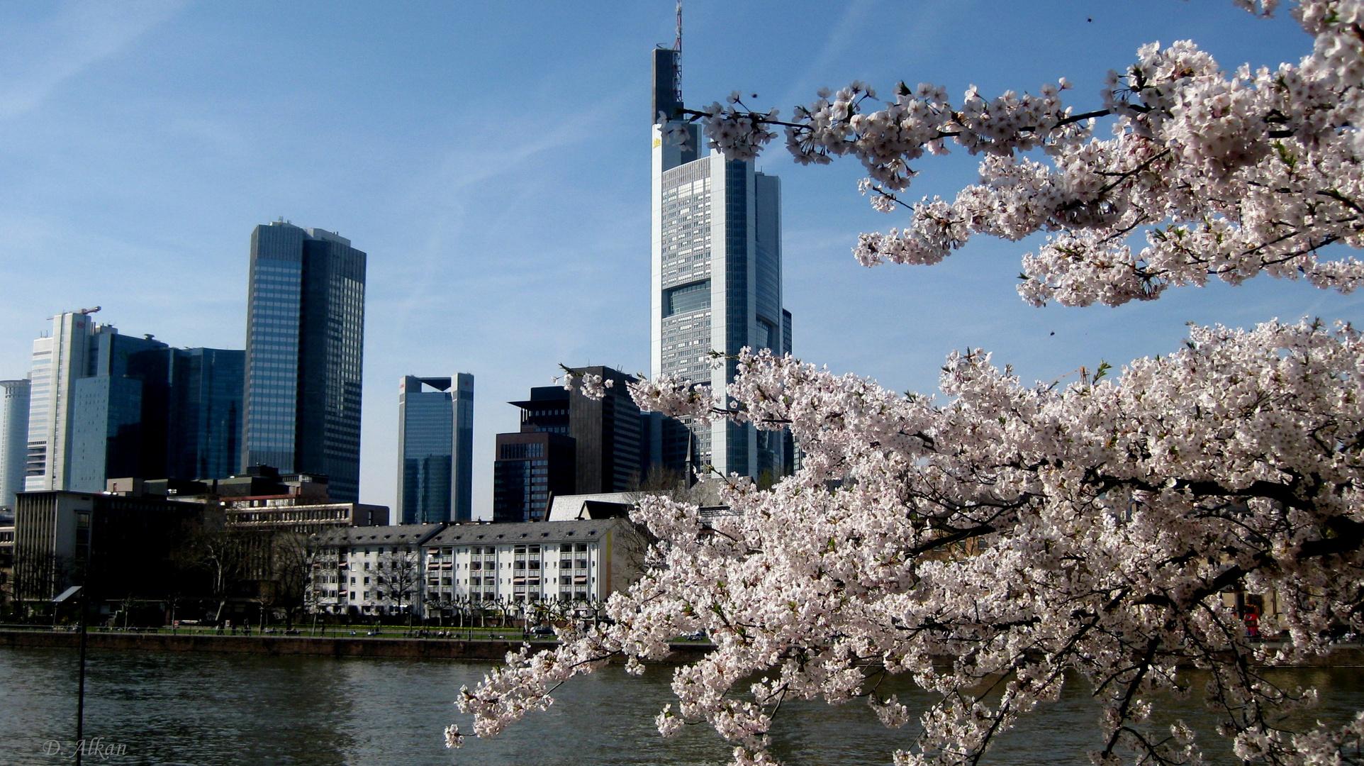 Frühling in der Stadt....