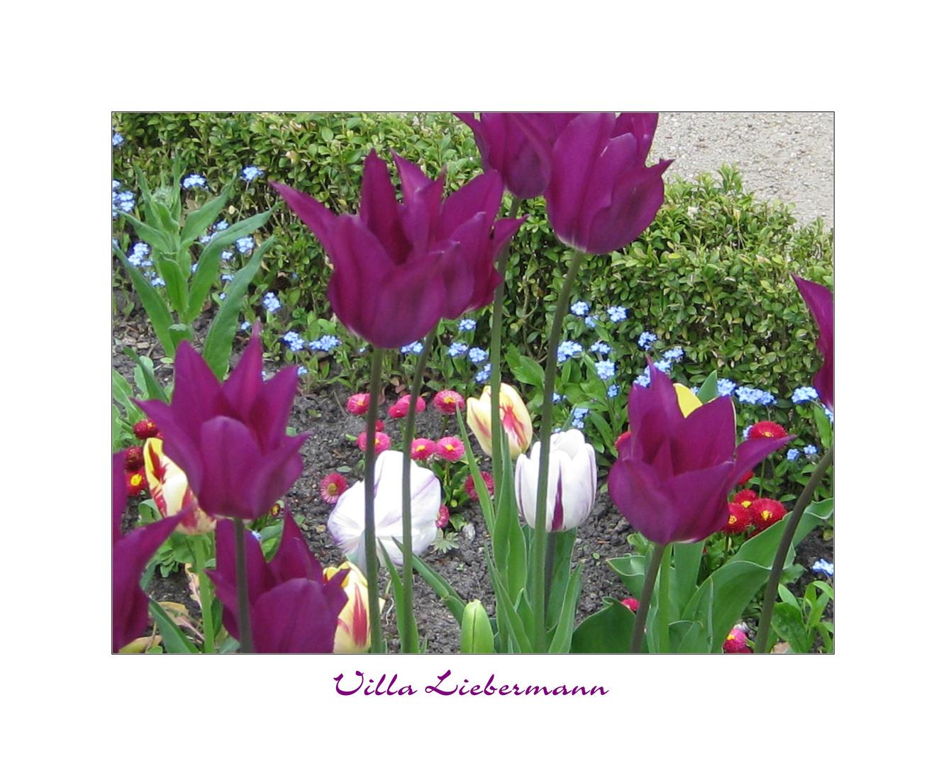Frühling in der Villa Liebermann