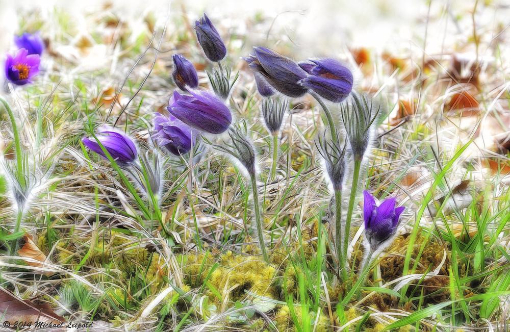 Frühling in der Wiesenthaler Schweiz