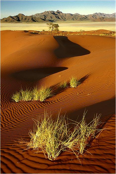 Frühling in der Wüste
