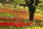 Frühling in Deutschland 2014