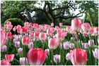 Frühling in Farbe und ...