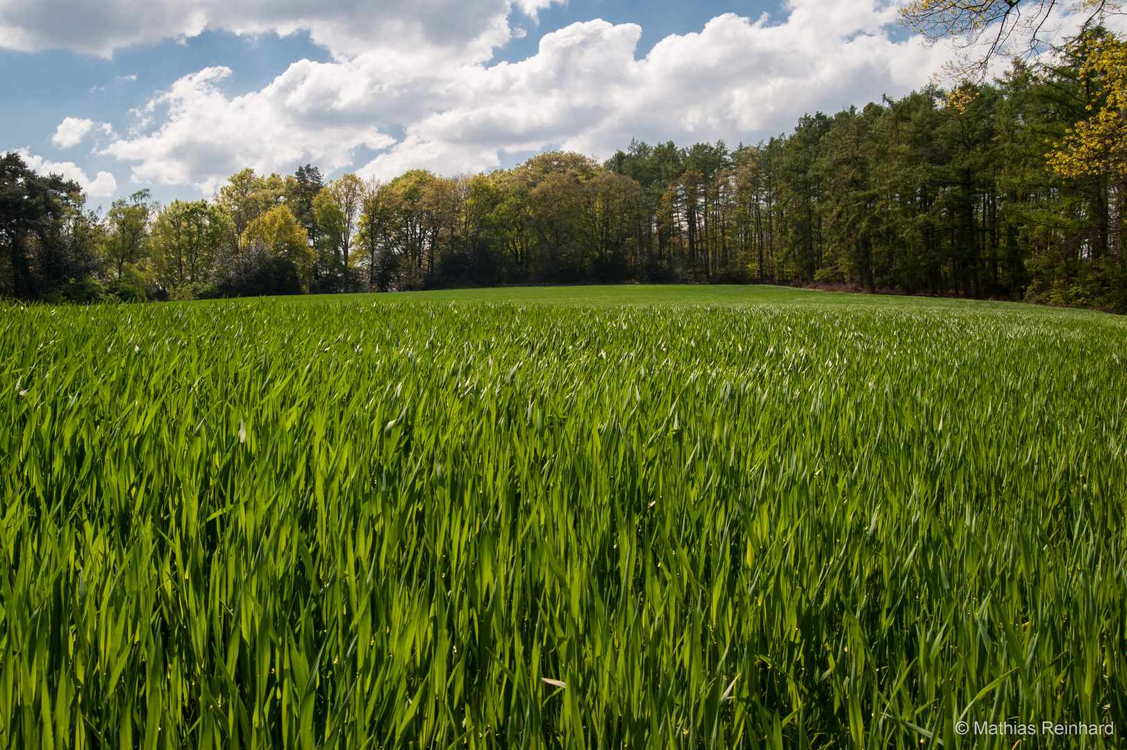 Frühling in Feld und Flur